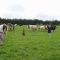 三友牧場の牧草地を見学。
