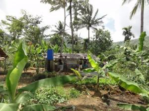 マーヴィンくんの畑。バナナや野菜が植わっています