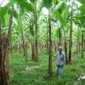 ミンダナオ島のバランゴンバナナの産地・ツピの生産者ソレイマンさん