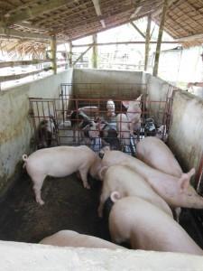 豚舎訪問7