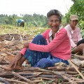 砂糖キビを共同管理で栽培する生産者